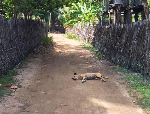 dog sleeping on the road