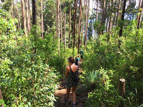 hike ella peak forest