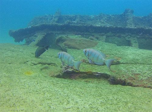 wreck fish